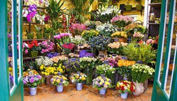 bloemenzaak franchise