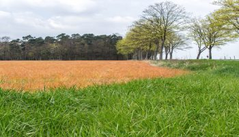 Duurzaam bodembeheer en pacht